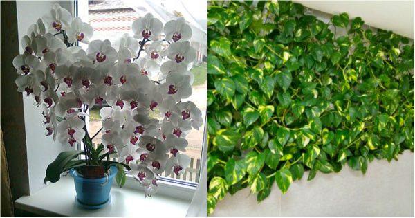 ¡Un fertilizante simple que da a las plantas de interior una floración rápida y un exuberante follaje!