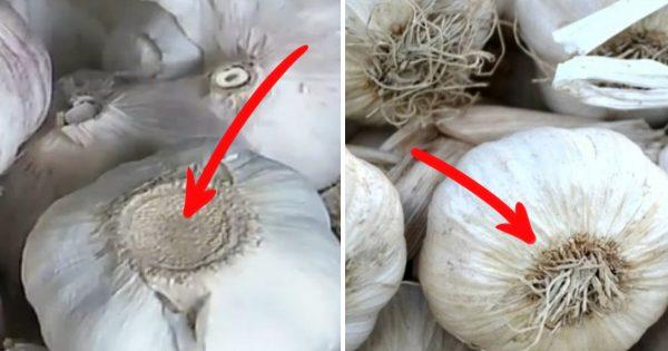 El ajo chino invadió los mercados… ¡Precaución, tu salud está en riesgo!
