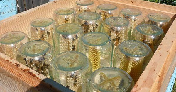 Este apicultor ha hecho una fortuna con la miel, gracias a un simple diseño. ¡Mira lo que hizo!