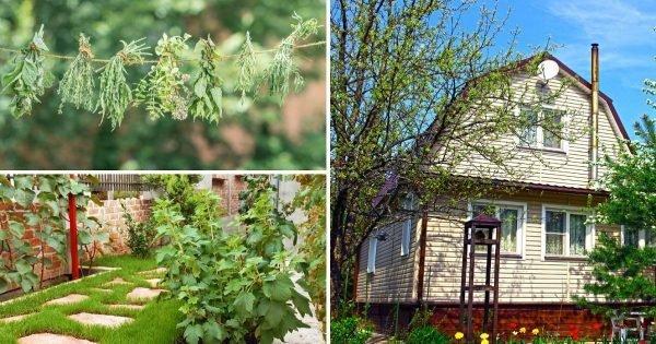 Una selección de inteligentes ideas para organizar una residencia de verano
