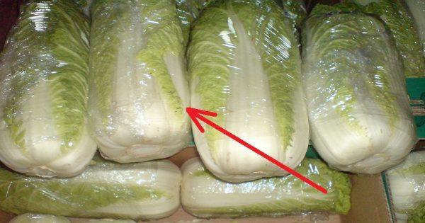 ¿Quieres elegir la col china ideal para tu ensalada? Solo sigue estos consejos…