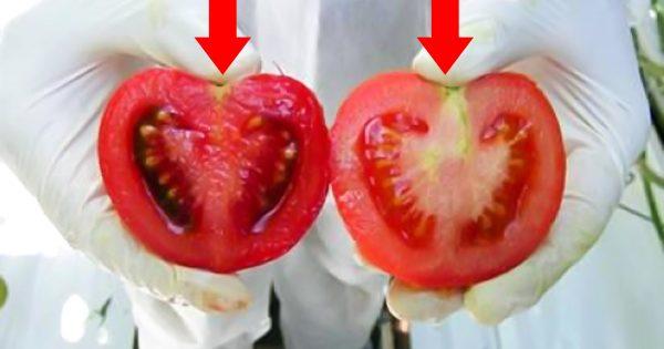 ¿Sabes lo que compras? Así es cómo se diferencian los tomates transgénicos de los naturales…