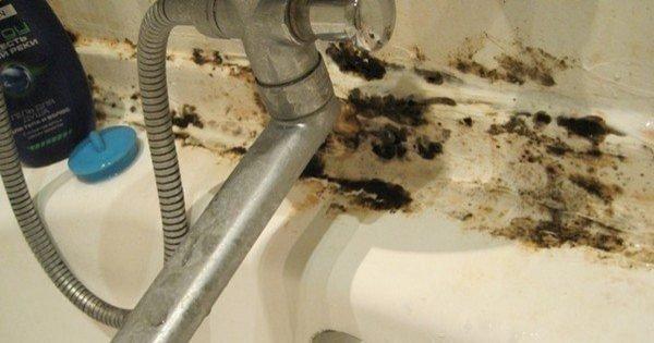 El moho negro ha ocupado todo el cuarto de baño... ¡La solución perfecta estaba al alcance de la mano!