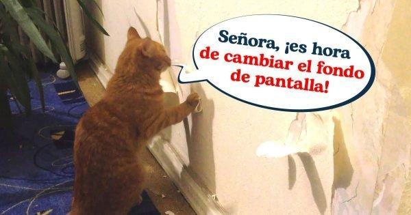 Una forma infalible de evitar que un gato rompa el papel tapiz y los muebles, de una vez por todas