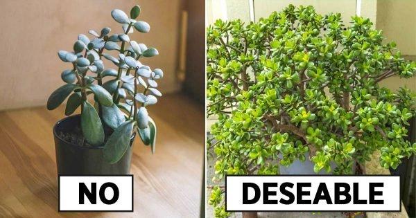 Reglas para colocar un árbol del dinero en una casa.