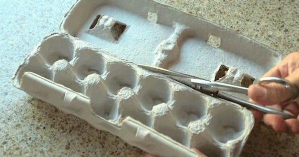 Solía tirar las cajas vacías de huevos. ¡Pero ahora que conozco estos 15 trucos, nunca más lo haré!