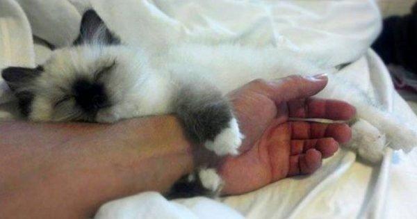 Si a un gato le gusta dormir en la cama de su protectora, ¿qué significa?