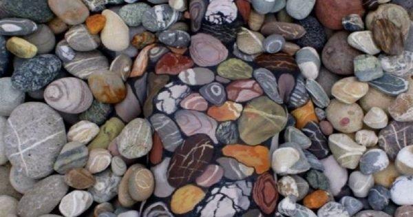 Entre las piedras y el follaje, una mujer viva descansa… ¿Podrás descubrirla?