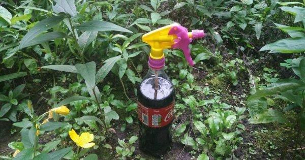 ¿Por qué compro litros «Coca-Cola» para mi casa de campo, pero no dejo que nadie la beba?