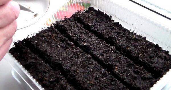 Compartiendo las ideas: ¡Cultivar verduras frescas, incluso fuera de la temporada, es posible!