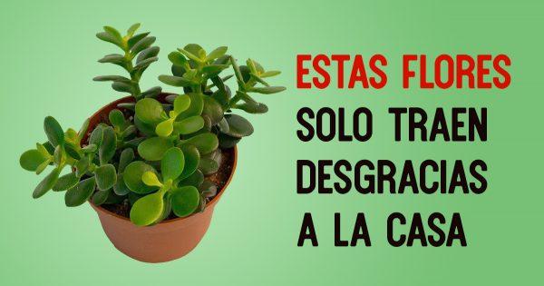 Estas plantas drenan tu energía, como vampiros. ¡Aléjate de ellas!