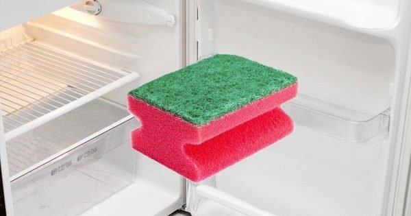 Por qué deberías poner las esponjas para lavar platos en el refrigerador