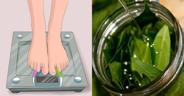 Laurel y canela: adelgazamiento a lo natural.