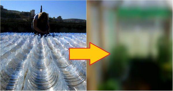 Todos se reían cuando él recogía botellas de plástico para su casita de campo. Pero llegó la primavera…