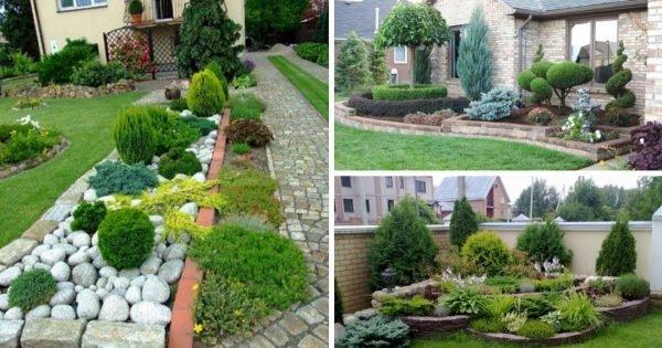 Espléndido jardín que no requiere de cuidados especiales. ¡Muy conveniente para los perezosos!