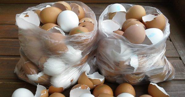 Es por eso que dejé de tirar las cáscaras de huevo! Ahora las convierto en algo sorprendente…