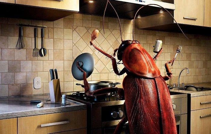 Remedio natural para eliminar las cucarachas del hogar - Eliminar hormigas cocina ...