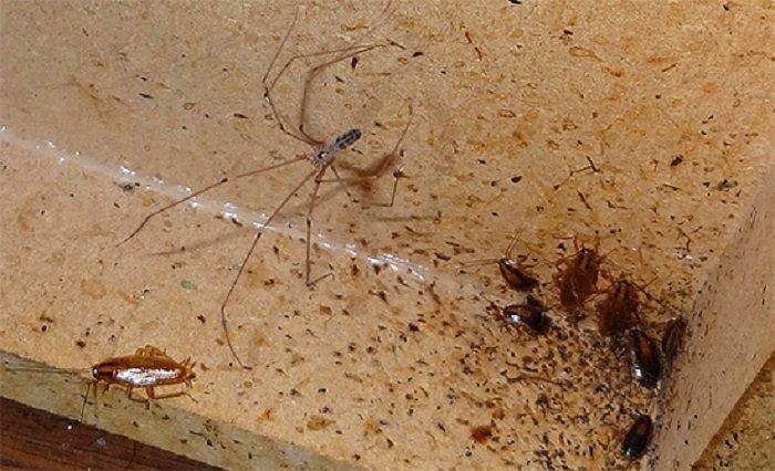 Eliminar cucarachas pequeas cocina perfect como eliminar - Exterminar hormigas en casa ...