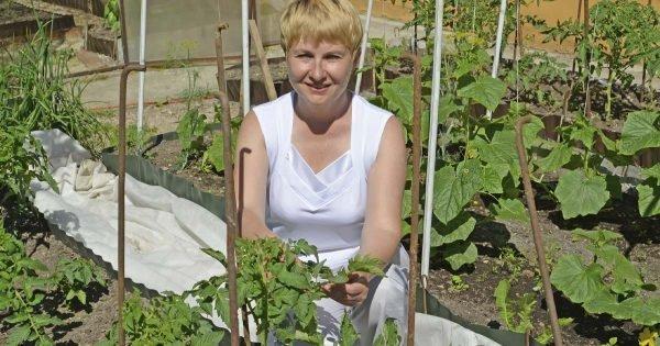 Cómo alimentar a los tomates, si hay muchas flores, pero pocos ovarios.