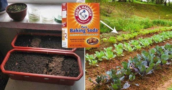 Como usar el bicarbonato de sodio en el jardín